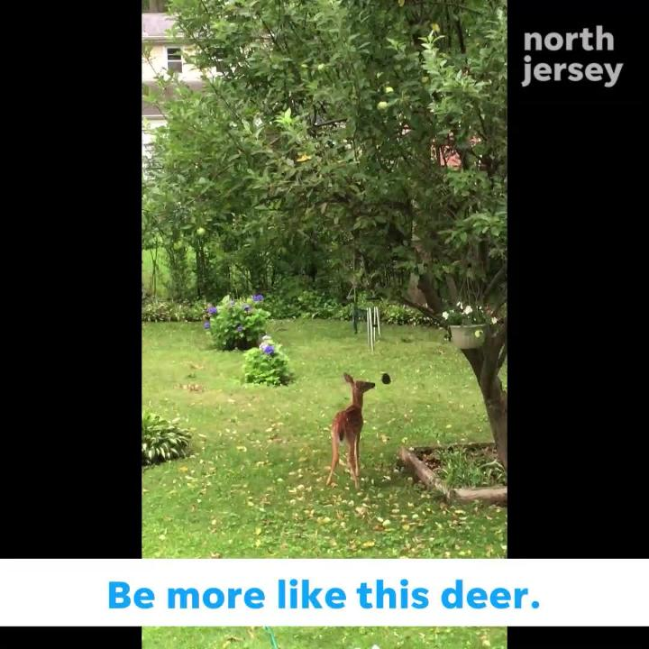 This deer loves playing with her wind chimes