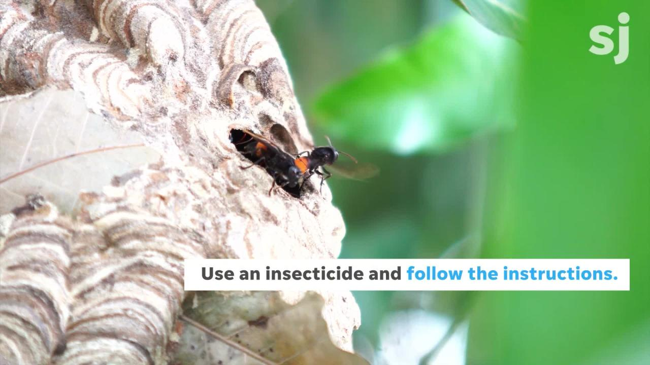 """The Northwest Center for Alternatives to Pesticides recommends leaving nest removal to professionals with """"expertise in working around stinging insects and protective clothing."""" But if you have to get rid of one yourself, here are some tips."""
