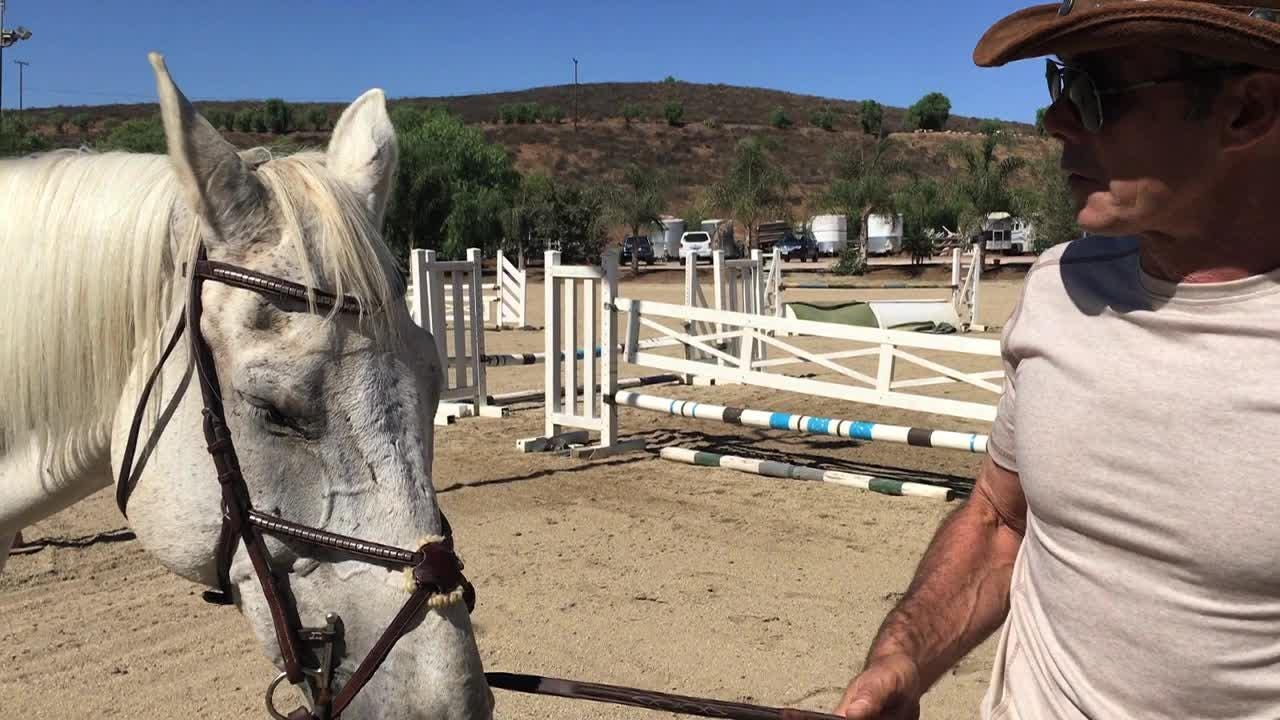 Val Georgiev, a Simi Valley resident and thoroughbred trainer, is the head wrangler for production on the new YouTube series Young Gods.