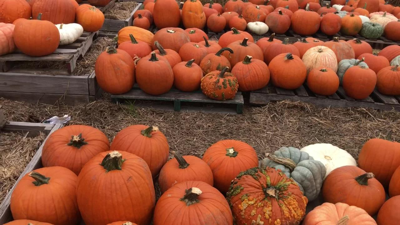 Here's three pumpkin patches already open for the season.