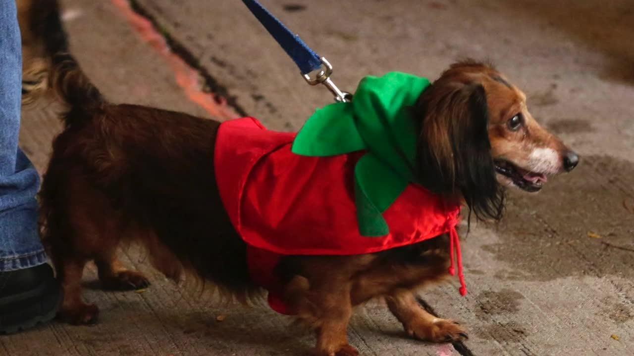 Sheboygan's Al & Al's holds Weiner Dog competitions