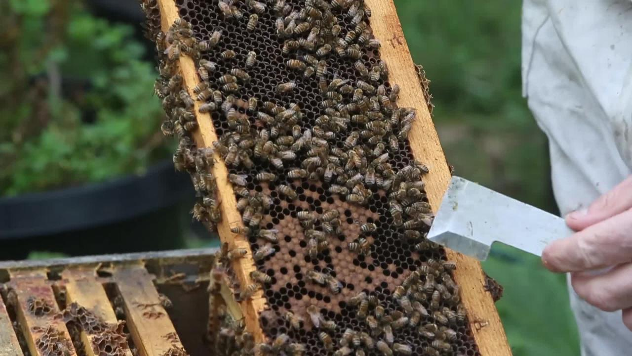 Dennis Remsburger of Remsburger's Honey gives us a tour of one of his beehives.