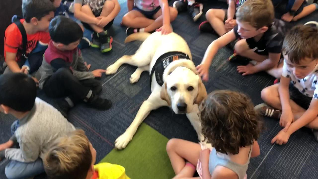 Brighton leads the way in furry therapy for kids, putting a dog in every school.