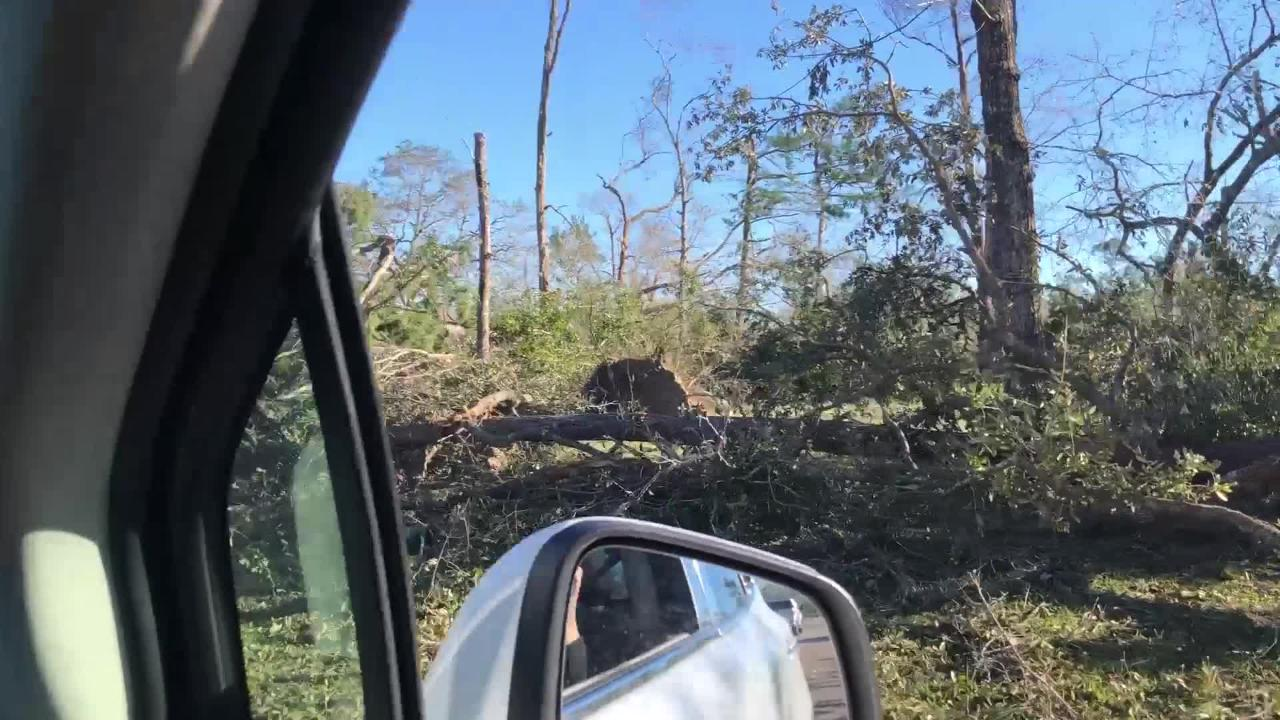 Marianna, Fla. is left bare after Hurricane Michael uproots trees and lives on Friday, Oct. 12, 2018.