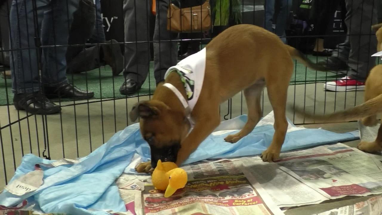 Plenty of good dogs from the Kentucky Humane Society were up for adoption at the GIE-EXPO conference at Freedom Hall.