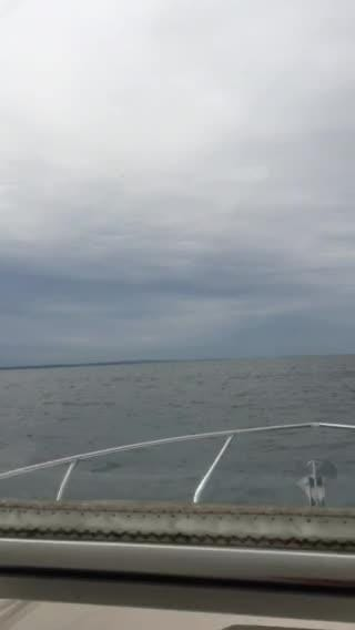 Former Assemblyman Guy Talarico spotted this humpback whale as he was fishing Sunday. Video courtesy of Guy Talarico