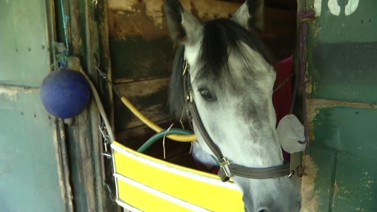 About two dozen former racehorses will be for sale Sunday in the third Delaware Park Annual Showcase.  10/19/18