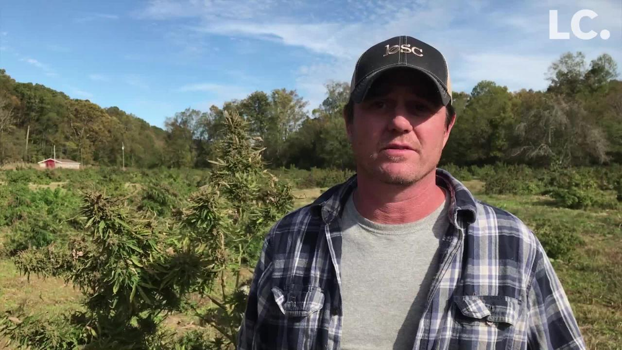 Indian Mound farmer saw a group of men plundering his hemp farm and pursued them almost to Clarksville, even as they opened fire on his pickup