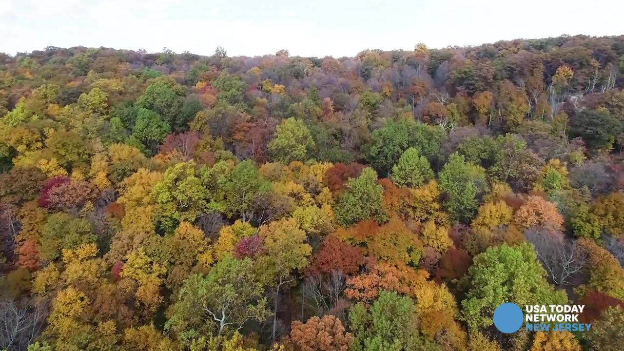 Drone footage of fall foliage at Ramapo Valley County Reservation Park in Mahwah.