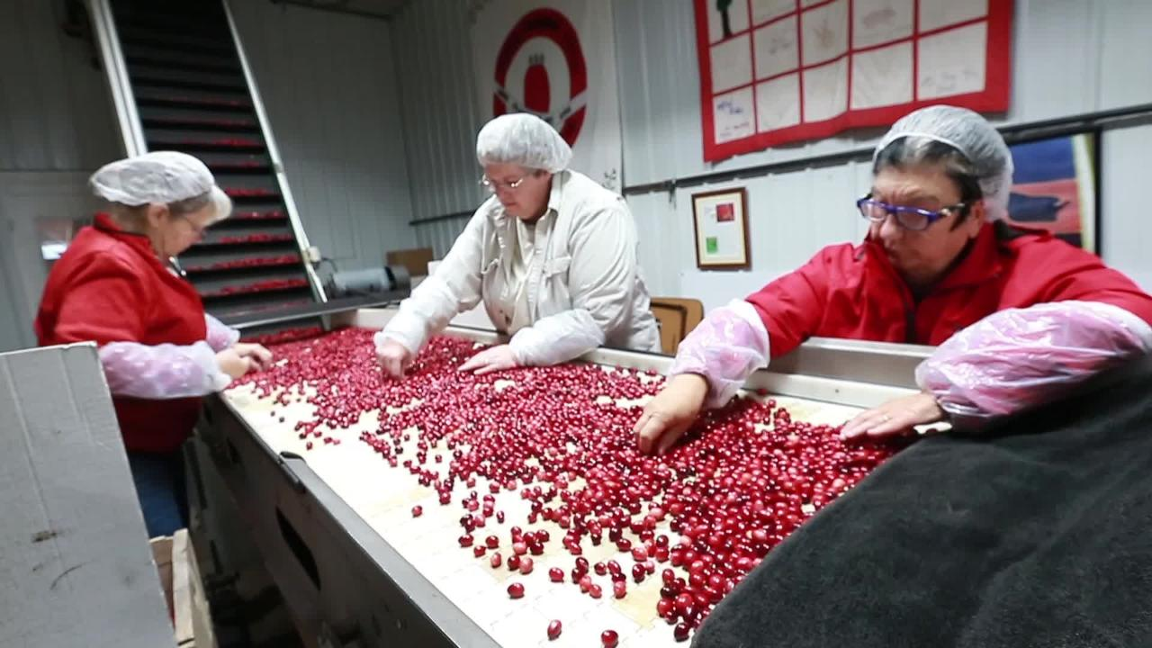 Wetherby Cranberry Co. co-owner Mike Gnewikow explains how the crop is processed for market. A bountiful harvest has created a glut.