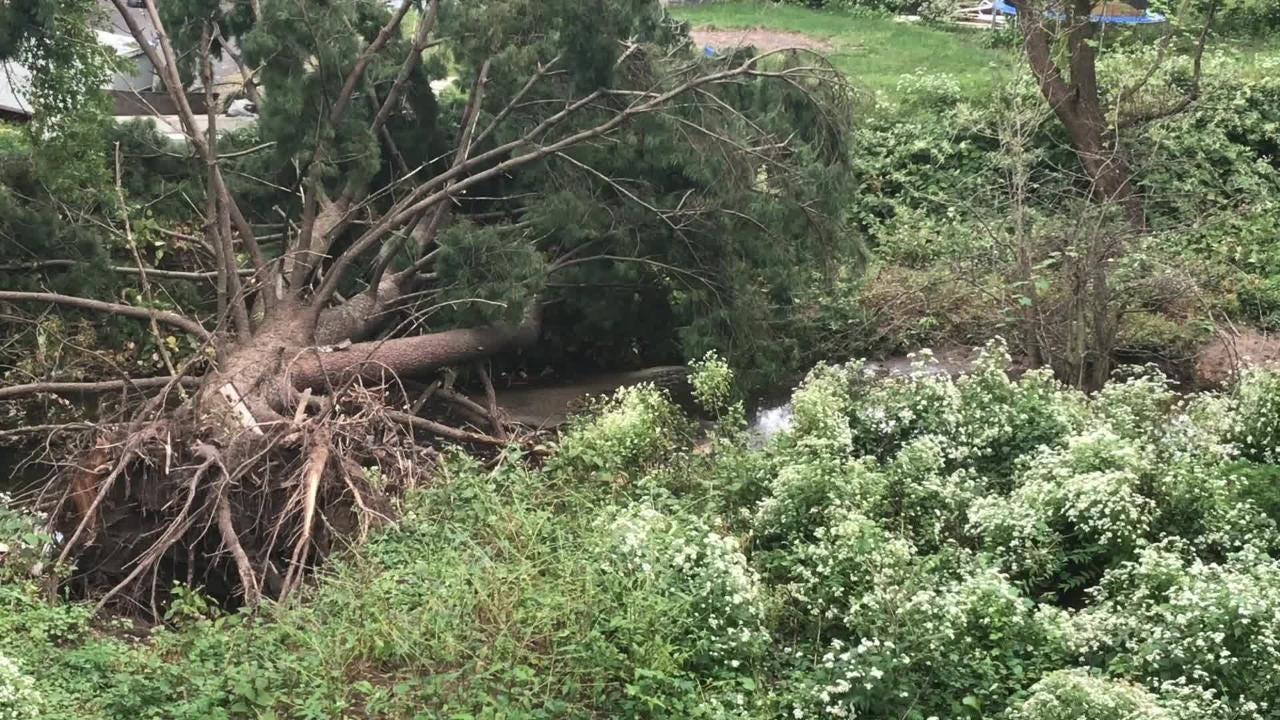 New Milford resident explains fallen tree