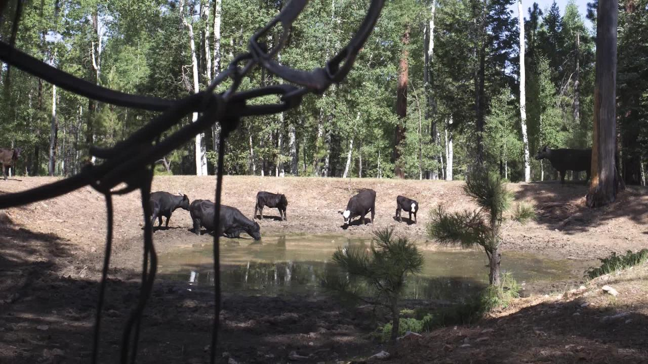 Ed Grumbine of the Grand Canyon Trust talks about the idea of grazing cattle to control cheatgrass at North Rim ranches on the Kaibab National Forest in Arizona.