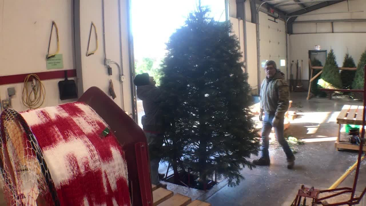 Pine View Haven Christmas Trees and Wreaths opened on the day after Thanksgiving in St. Thomas, Pennsylvania.