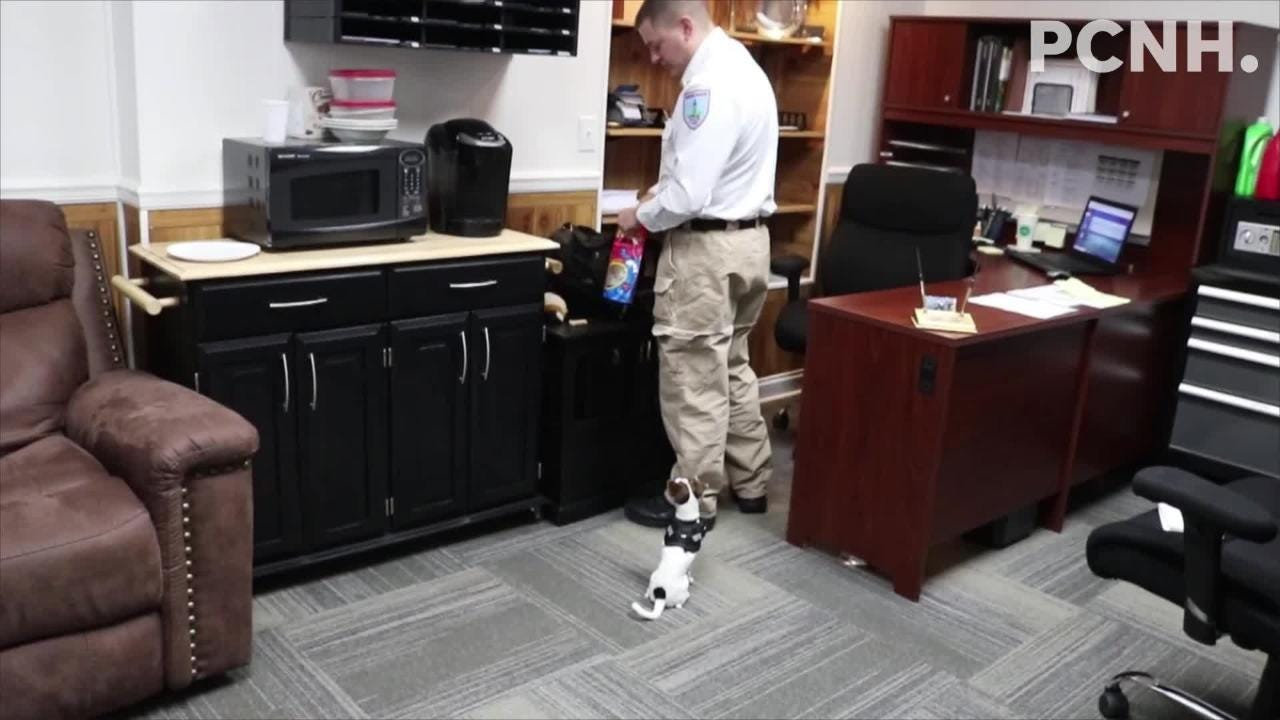 Meet Zorro, the Marblehead Police Department's newest pint-sized K-9 officer.