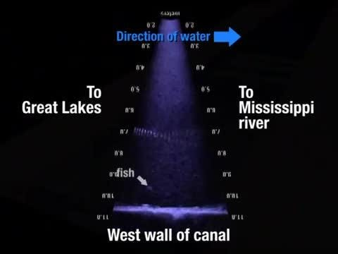 A Watershed Moment Video shows fish crossing barrier meant to stop Asian carp
