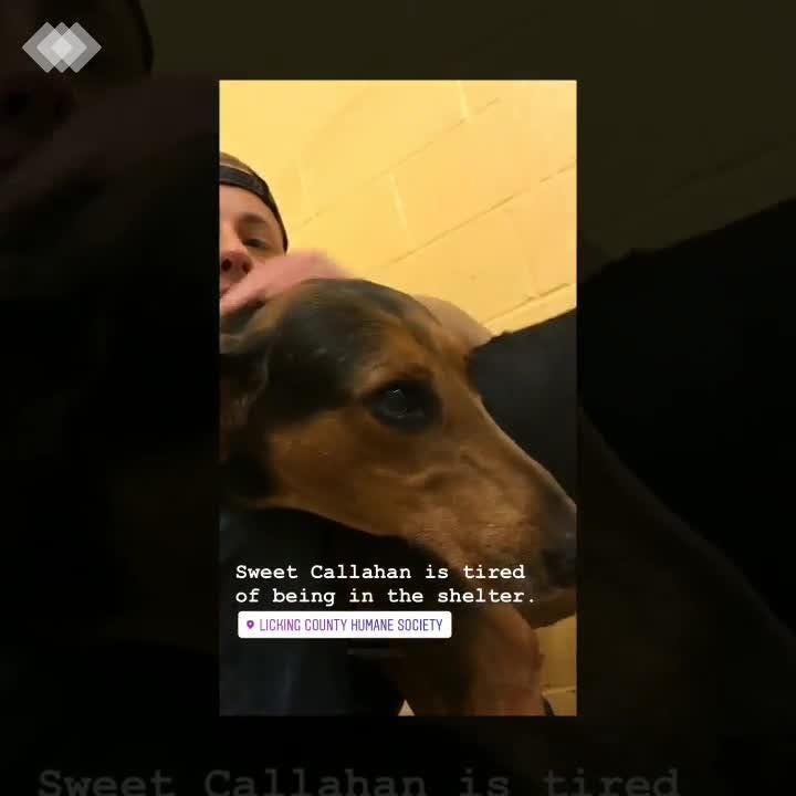 Callahan is a neutered male, 6-year-old, Hound/DobermanPinschermix.