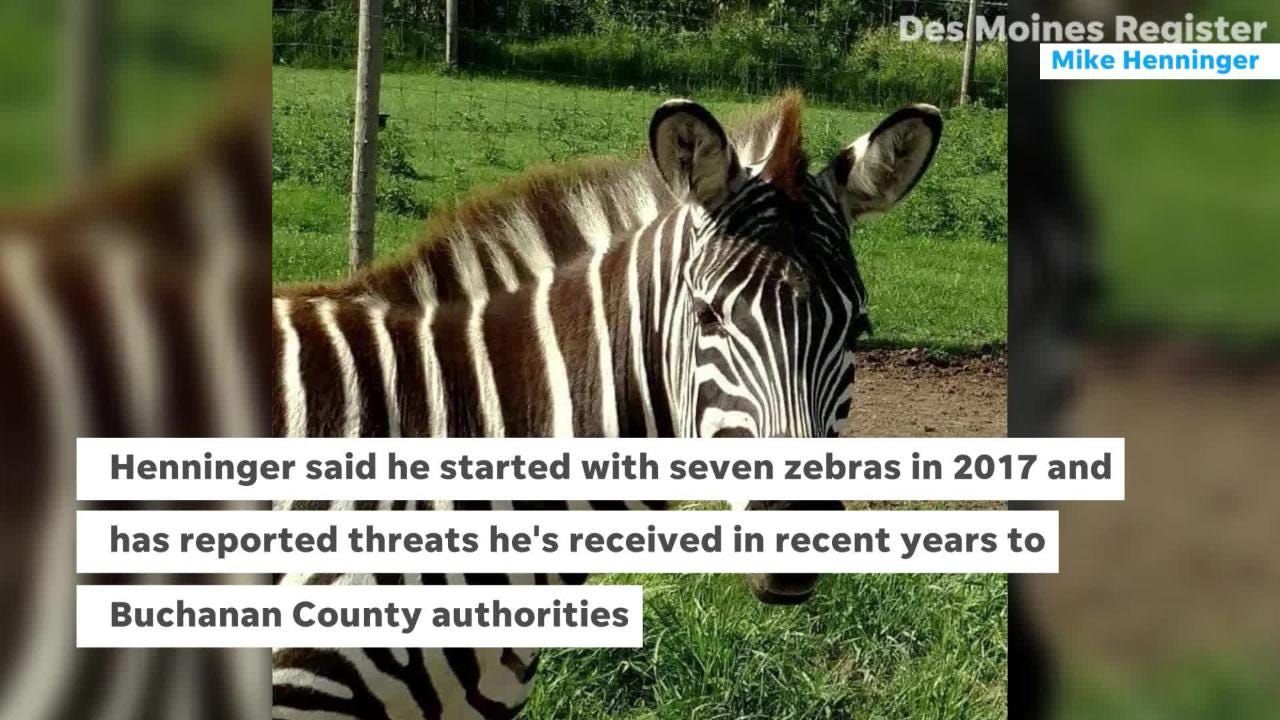 Iowa safari owner finds his zebras, and himself, mysteriously shot.