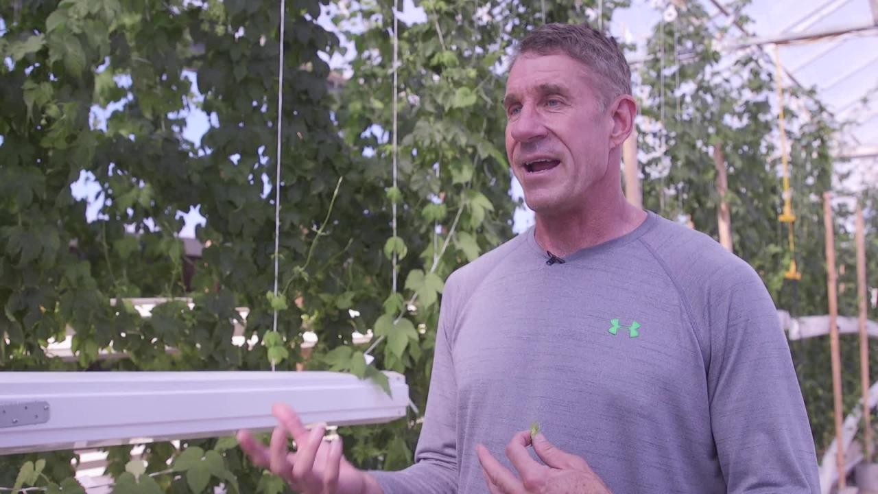 24 Hour Hops founder Greg Stelzer talks about the process of growing wet hops for beer at his greenhouse near Maricopa.