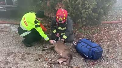 The Wayne Township FIre Department rescued a dog from a garbage fire Nov. 26.