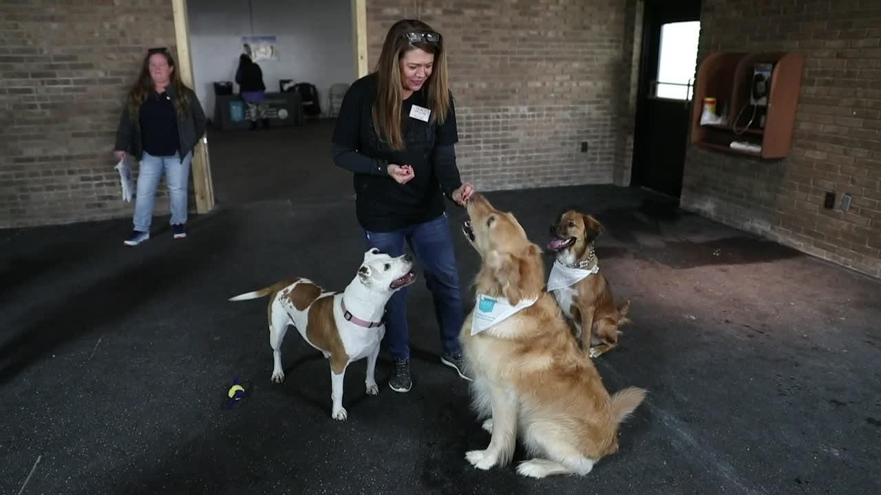 Experience sights and sounds from dogs inside a new indoor dog park Indianapolis, Indy's Indoor Bark Park, during its grand opening.