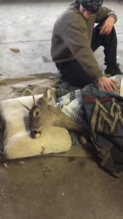 A buck was taken to a Warrington Township garage after it was stuck in  cold water for hours on Saturday, Jan. 12. The buck died early Sunday morning.