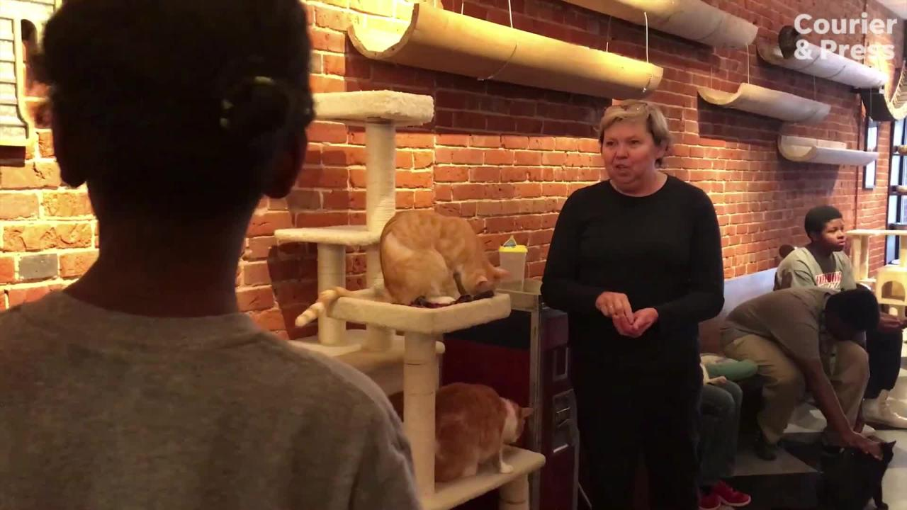 Bosse Life Skills students visit River Kitty Cat Cafe
