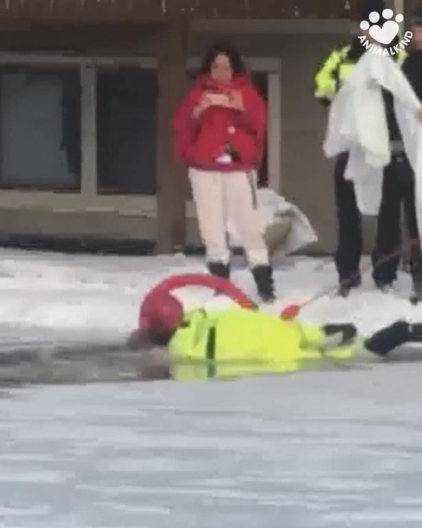 Video captures dramatic rescue of dog from icy pond
