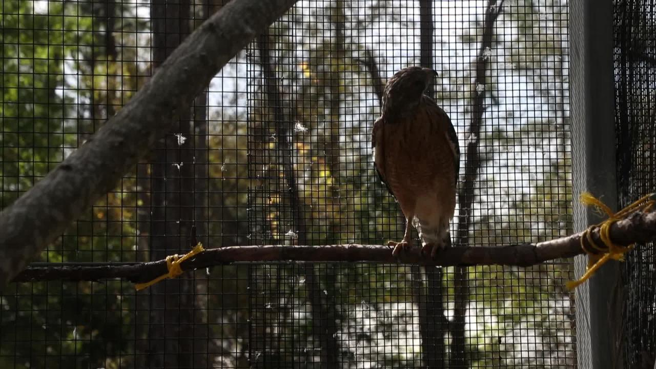 After years of delays and issues Calusa Nature Center aviary set to open