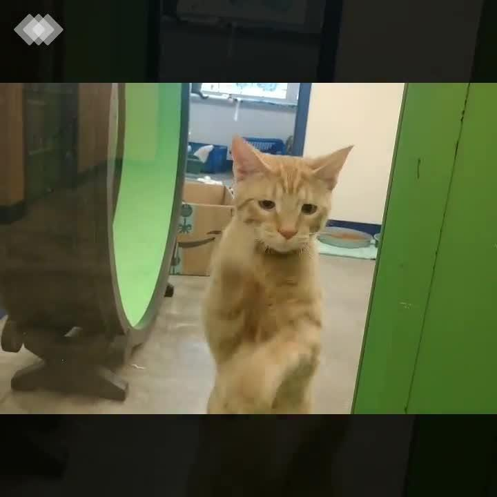 Cheddar wants to get out of the shelter NOW! Cheddar is a playful, outgoing, friendly little guy.