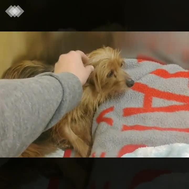 The Licking County Humane Society has taken in several dogs that were rescued from a Puppy Mill in Northern Ohio.