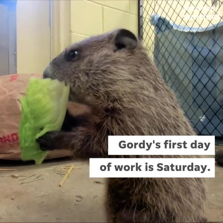 The Milwaukee County Zoo would like you to meet Gordy, their new groundhog.