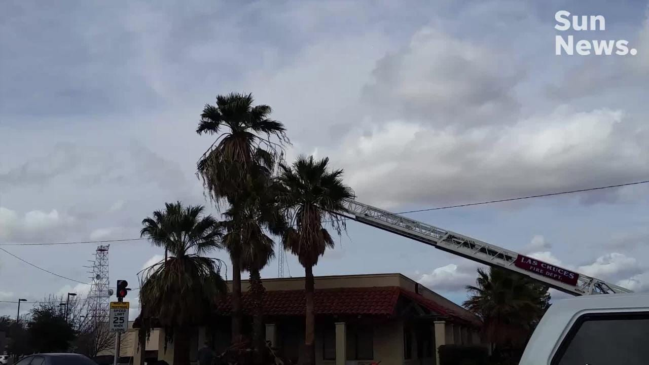 A tree trimmer was in distress Tuesday, Feb. 5 while working in a palm tree at a site on Idaho Avenue. Emergency crews were called in to help.