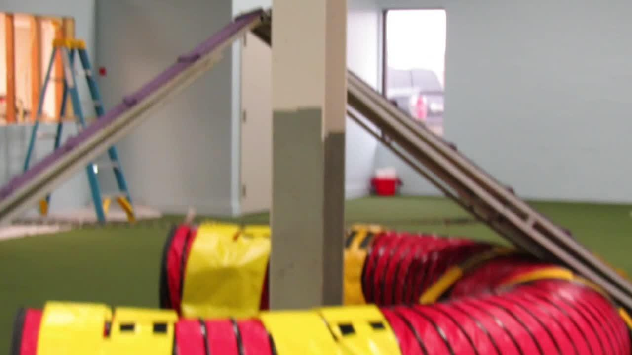 Watch D. Lynne Luckow, owner of the upcoming Redline dog training center in Germantown, run her dogs through the agility course.