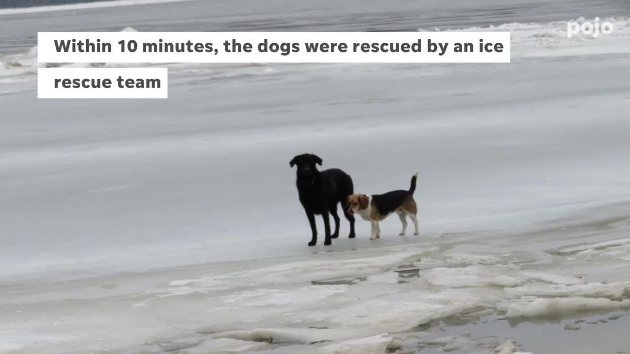 Two dogs were rescued Thursday afternoon after they were stuck in ice over the Hudson River as seen on Feb. 7, 2019