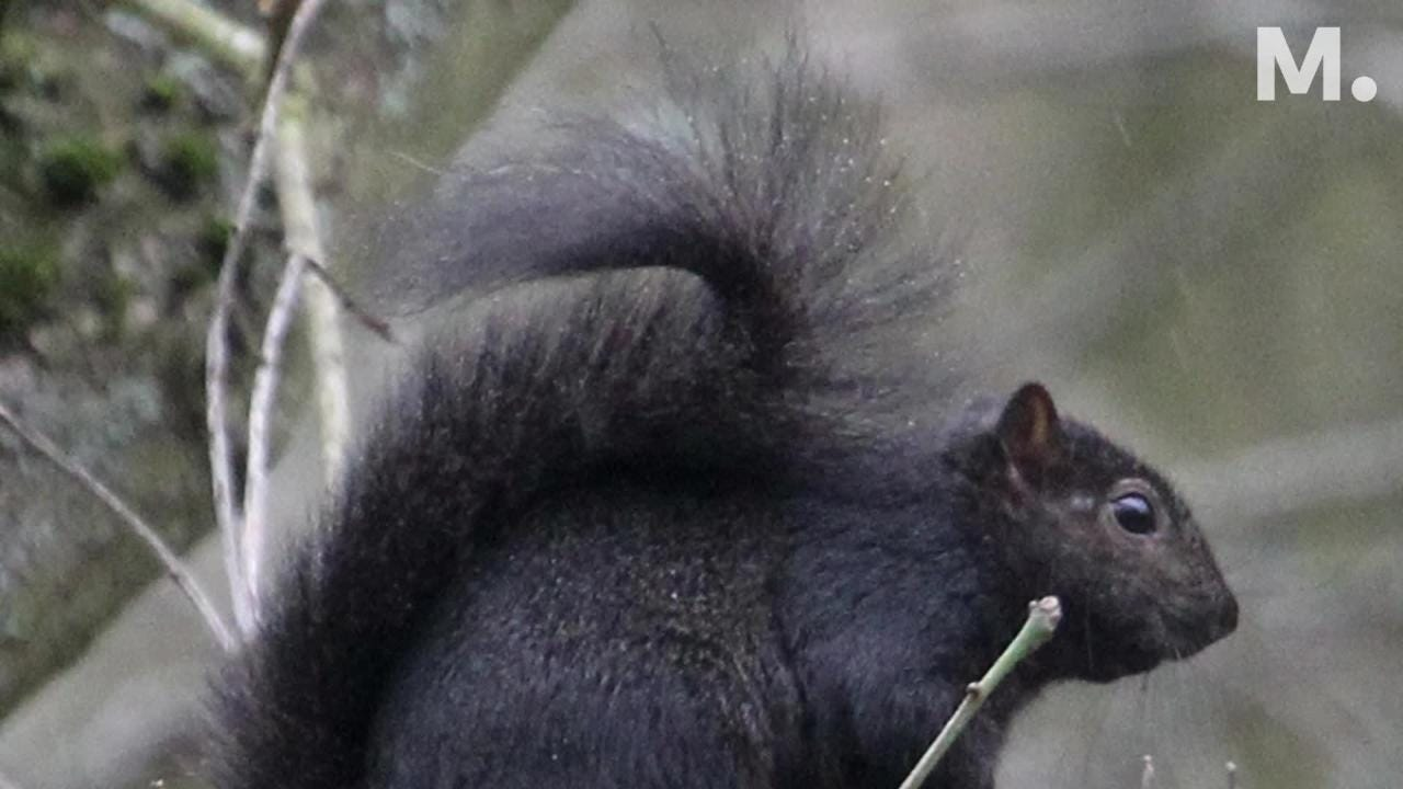 Squirrels don't always get that much appreciation from humans, but they have a long history of living in our midst.