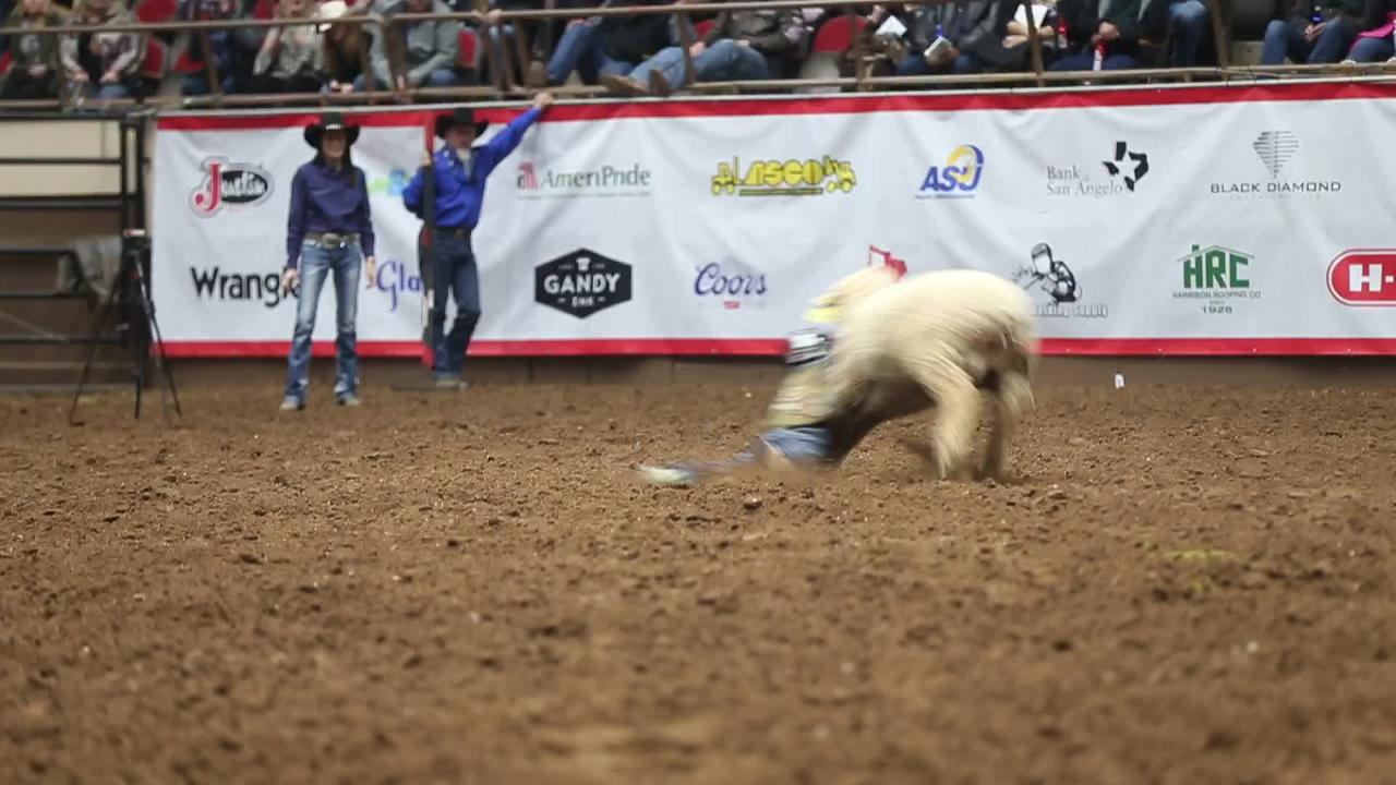 Longest mutton bustin' ride of the 2019 San Angelo Rodeo so far Saturday, Feb. 9, 2019.