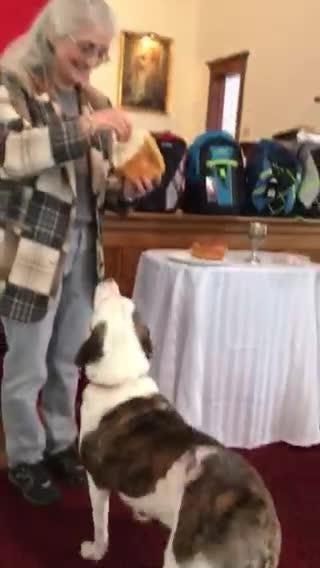 Gemma, a dog up for adoption at Harper's Haven Dog Rescue,  receives Communion at Harpursville United Methodist Church on a recent Sunday.