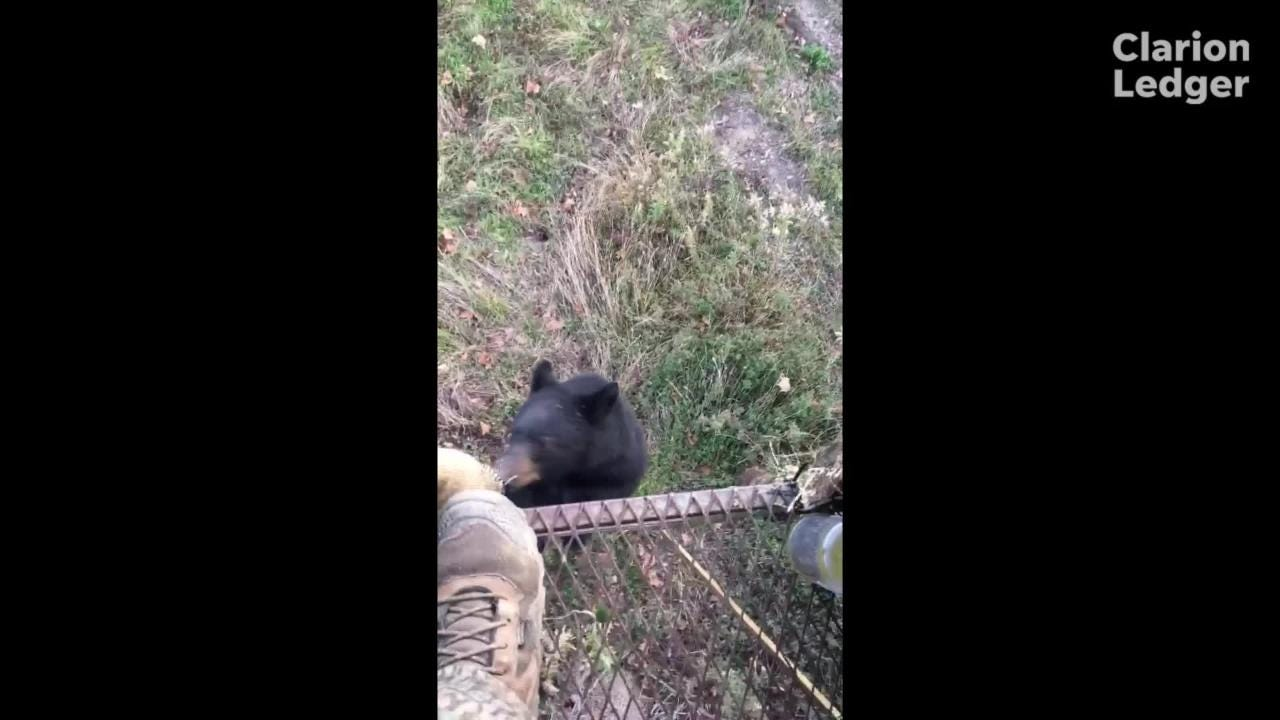Jordan Coopwood and friend Andrew Smith were hunting in the Mississippi Delta when a bear climbed up their ladder stand. The hunters think the young bear smelled the honey buns they had just eaten.
