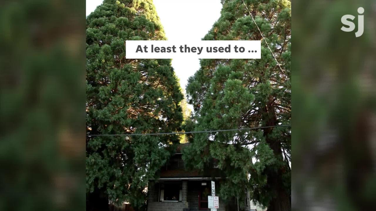 The giant sequoias in front of a 111-year-old home in northeast Salem are in the middle of a squabble between a property owner and the city.
