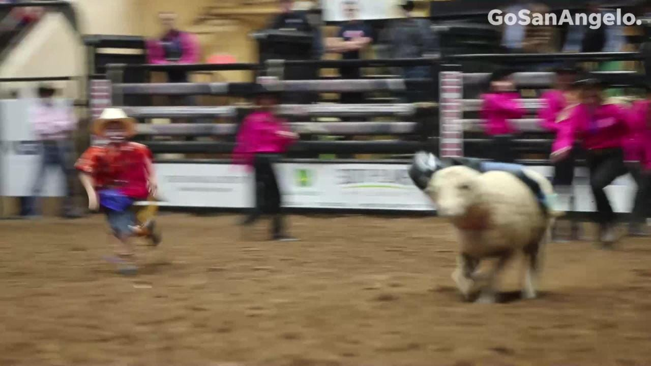 These young boys and girls take the wildest rides in the San Angelo Stock Show & Rodeo - the mutton bustin'.