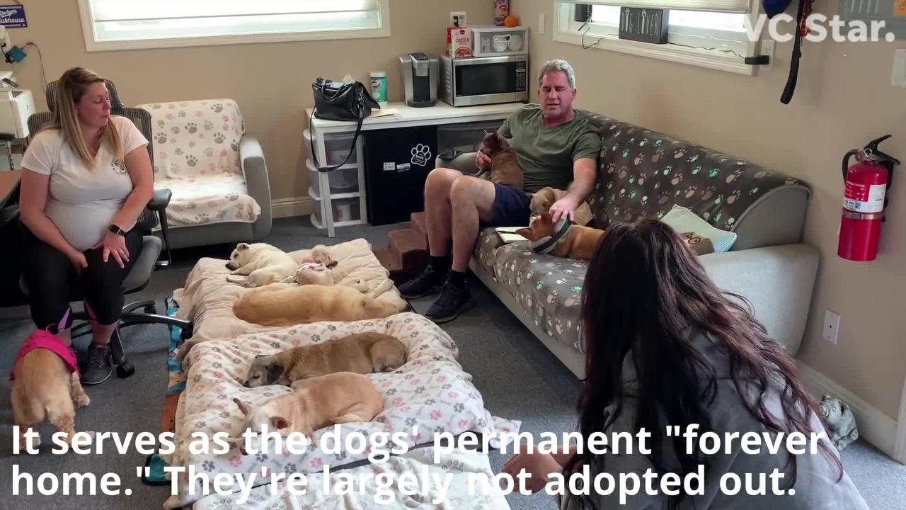 Sick and senior dogs are given a 'forever home' at Wise Tails sanctuary in Simi Valley.