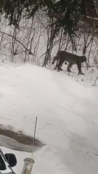 Hunter Soper caught a glimpse of a cat outside his family's Lexington home.