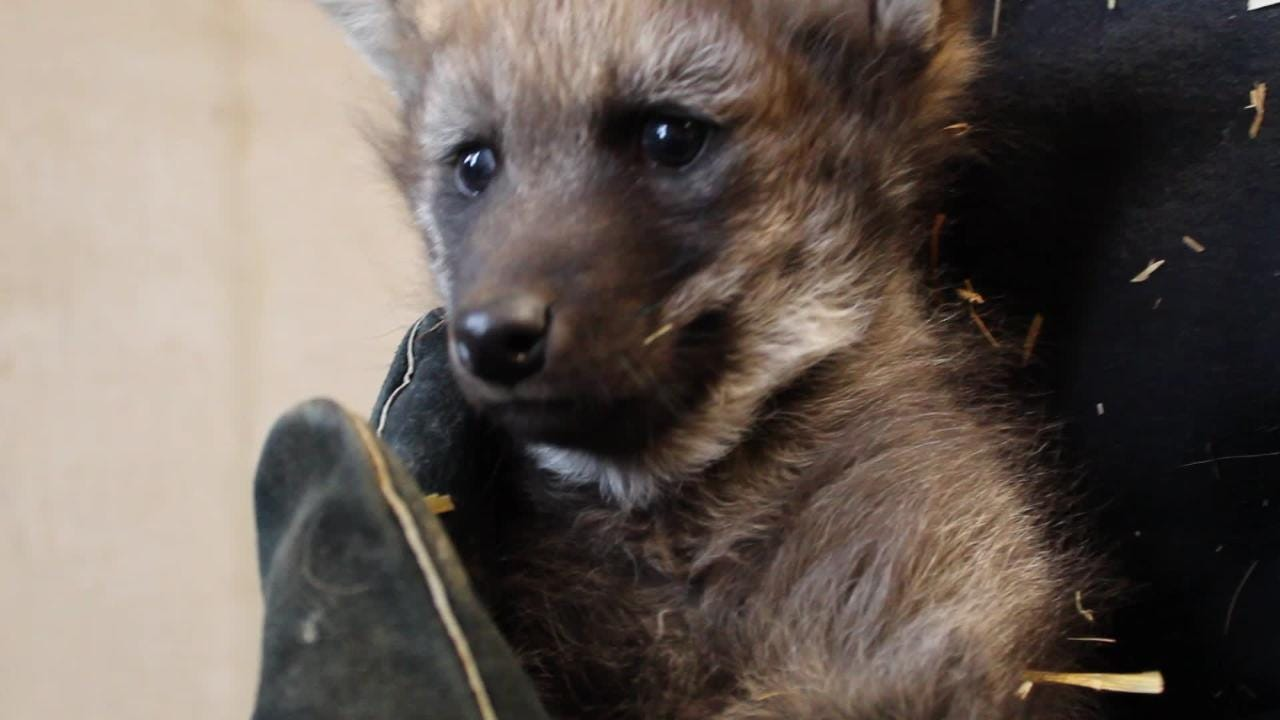 Zoo officials say the cub is healthy.