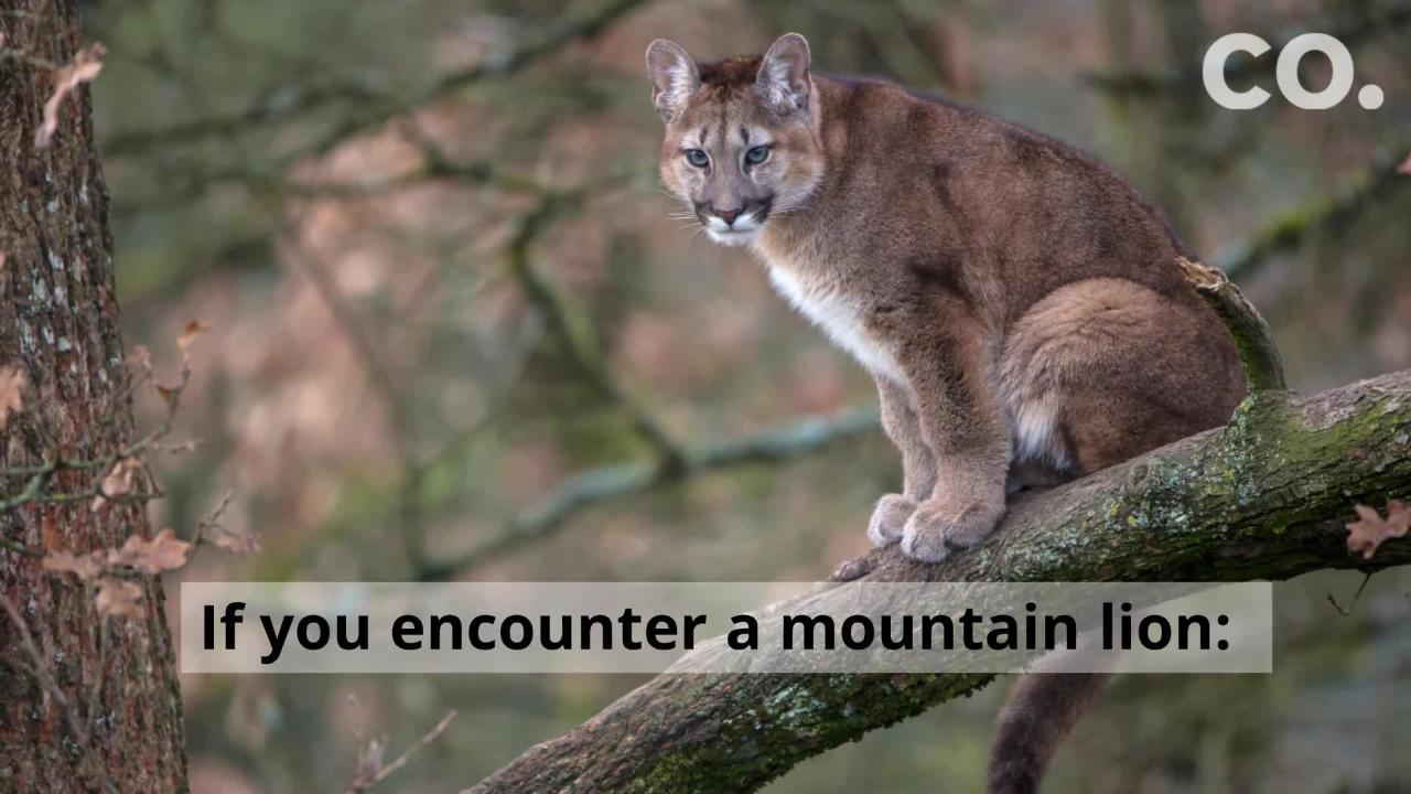 From bears to mountain lions, find out what you can do to keep everyone safe.
