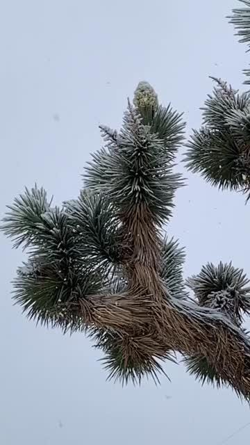 Snow fell in parts of Joshua Tree, Morongo Valley, Yucca Valley and Highway 74 February 21, 2019.