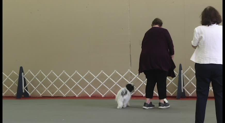 Annual Ochlockonee River Kennel Club dog show comes to fairgrounds.