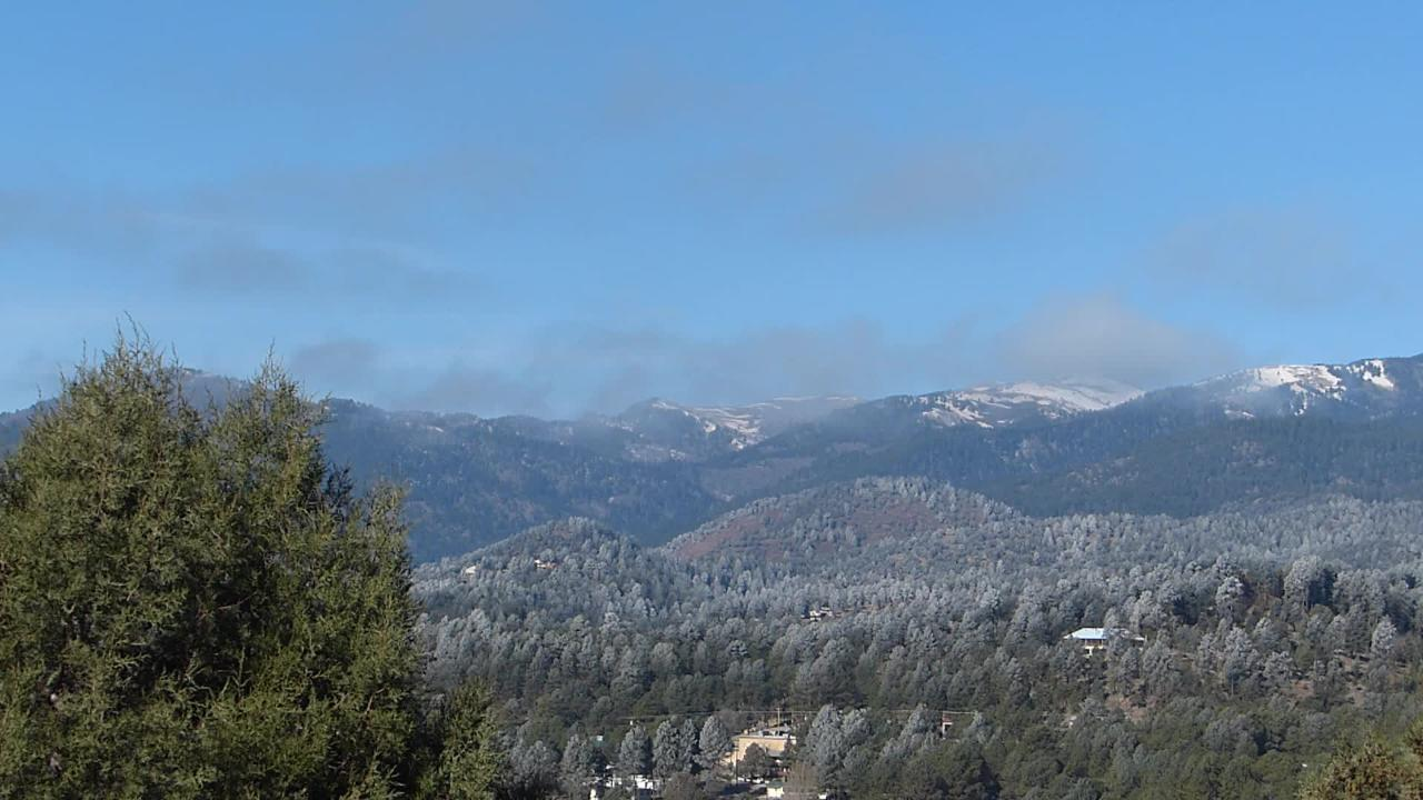 Frost line delineates where the colder temperatures hit early Monday in Ruidoso.