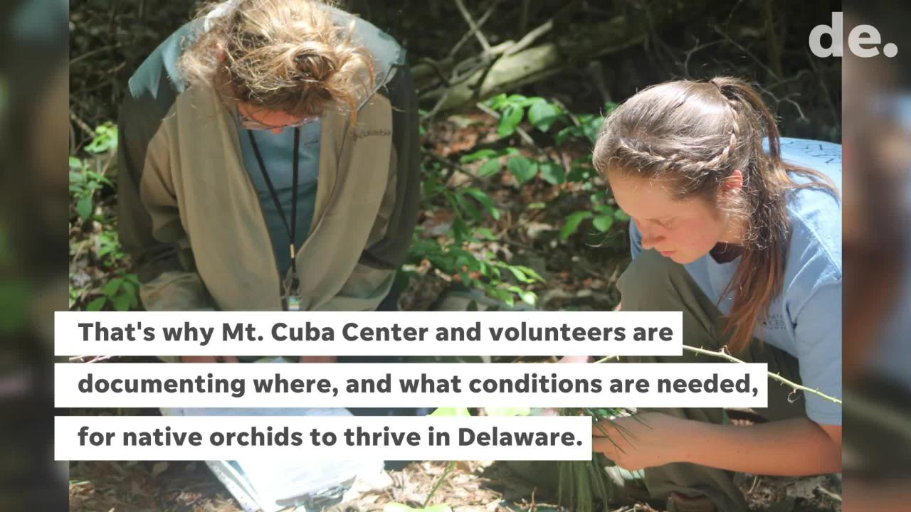 Mt. Cuba Center in Hockessin and a team of orchid scouts are searching for some of the rarest flowers in the First State.