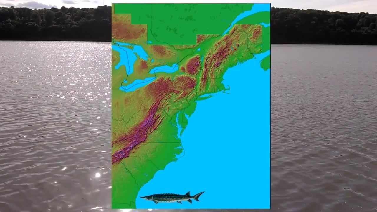 A 14-foot sturgeon was spotted last year in the Hudson River. This video from the DEC shows how they are trying to protect and grow the endangered sturgeon population