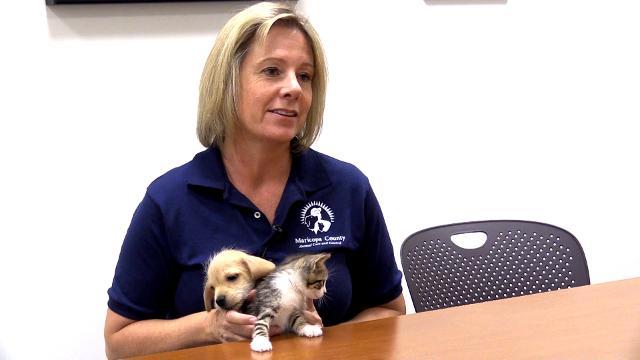 Lleno de gente los refugios de animales se preparan para el 4 de julio de fugitivos de las mascotas AZCentral.com 1